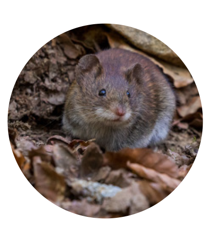 Rats, Squirrels, Mice & Rodents